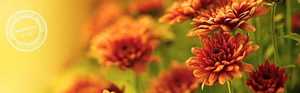 Legyen az ősz is virágos!