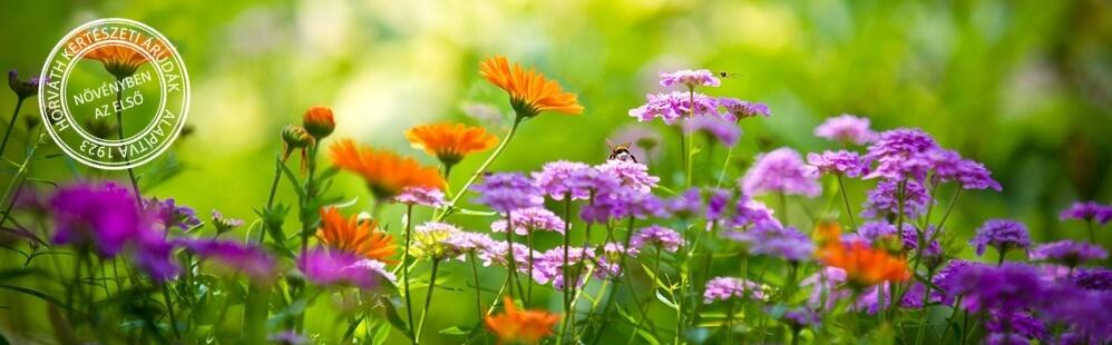 Eljött a nyári növények ideje
