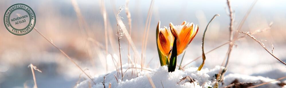 Közeleg a tavasz már
